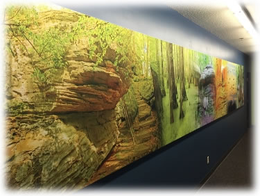 Large SEG outdoor photography mural in an office hallway.
